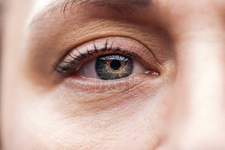 """Photo pour Vue rapprochée de l """"œil d'homme adulte avec cils et sourcils regardant la caméra - image libre de droit"""
