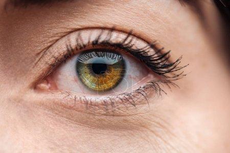 Photo pour Fermer vers le haut la vue de l'oeil de jeune femme avec des cils et le sourcil regardant l'appareil-photo - image libre de droit