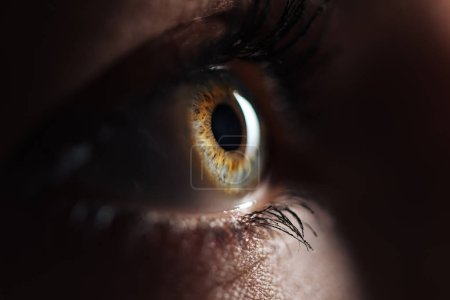 Photo for Close up view of human eye with eyelashes and eyebrow looking away in dark - Royalty Free Image