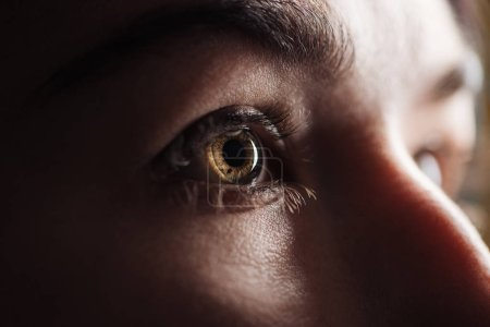 Photo for Close up view of adult woman eye with eyelashes and eyebrow looking away in dark - Royalty Free Image