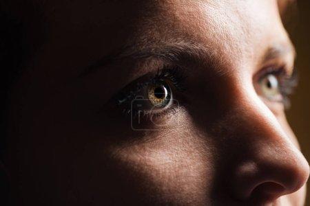 """Photo pour Vue rapprochée de l """"œil de femme adulte avec des cils et des sourcils regardant dans l'obscurité - image libre de droit"""