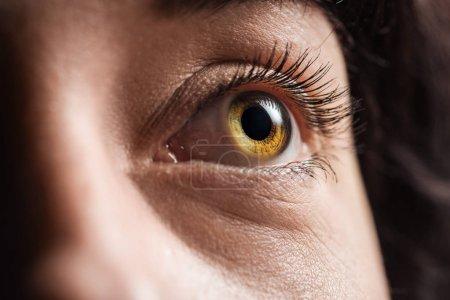 """vue rapprochée de l """"?il de jeune femme avec cils et sourcils détournés"""
