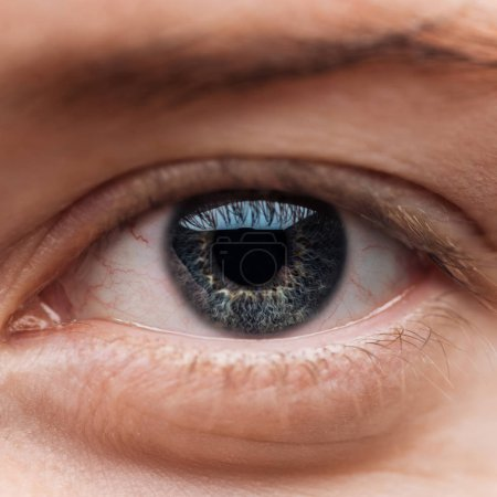Photo for Close up view of human blue colorful eye with eyelashes - Royalty Free Image