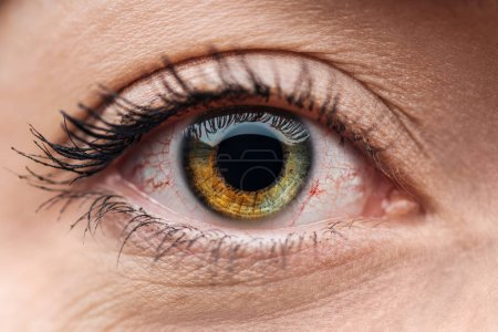 Photo for Close up view of human brown and green colorful eye with eyelashes - Royalty Free Image