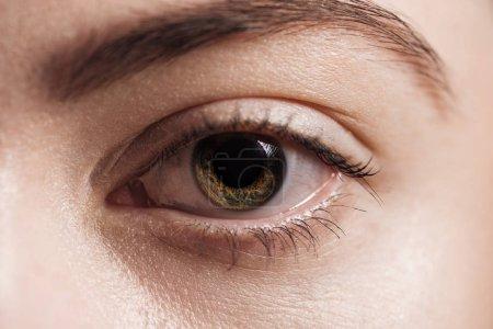 Photo pour Vue rapprochée de l'oeil brun humain regardant la caméra - image libre de droit