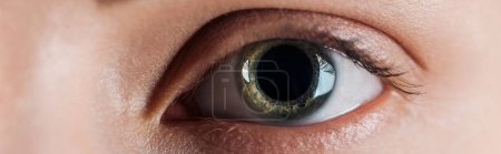Photo for Close up view of woman clear eye looking at camera, panoramic shot - Royalty Free Image