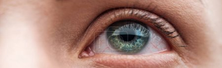 Photo for Close up view of human clear green eye looking away, panoramic shot - Royalty Free Image