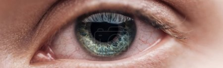 Photo pour Vue rapprochée de l'œil vert humain regardant la caméra, vue panoramique - image libre de droit