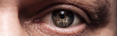 close up view of mature human eye looking at camera, panoramic shot
