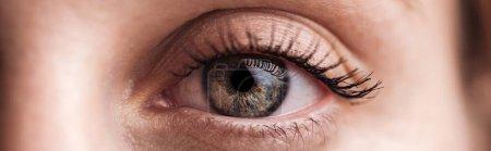close up view of human grey eye looking at camera, panoramic shot
