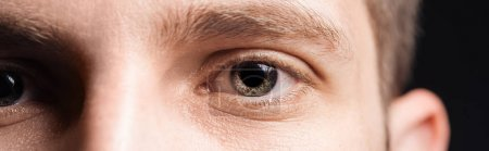 Photo for Close up view of human grey eyes looking at camera, panoramic shot - Royalty Free Image