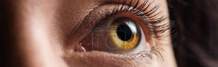 Photo for Close up view of human shiny eye looking away, panoramic shot - Royalty Free Image