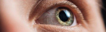 close up view of human green clear eye looking away, panoramic shot
