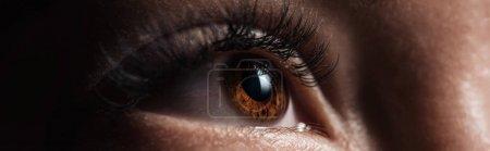 close up view of human brown eye with long eyelashes looking away in dark, panoramic shot
