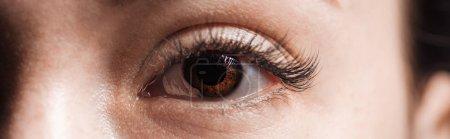 Photo for Close up view of human brown eye with long eyelashes looking at camera, panoramic shot - Royalty Free Image