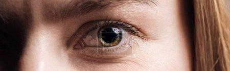 close up view of human eye looking at camera, panoramic shot