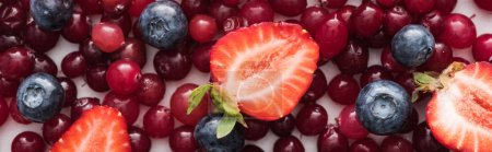 Photo for Panoramic shot of red, fresh and ripe cranberries, cut strawberries and whole blueberries - Royalty Free Image