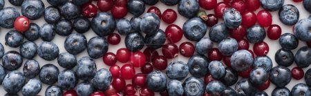 Photo for Panoramic shot of red, fresh and ripe cranberries and whole blueberries - Royalty Free Image