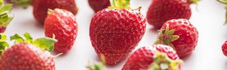 Photo pour Plan panoramique de fraises fraîches et mûres sur fond blanc - image libre de droit