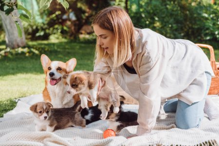 Photo for Attractive blonde girl sitting on white blanket in garden with cute welsh corgi puppies and dog - Royalty Free Image
