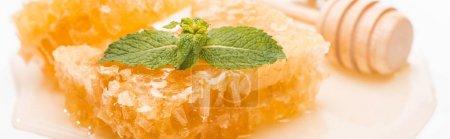 Foto de Foto panorámica de panal con miel decorada con menta cerca de la miel de madera dipper sobre fondo blanco - Imagen libre de derechos