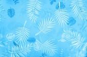 """Постер, картина, фотообои """"верхний вид экзотических листьев бумаги на синем минималистическом фоне"""""""