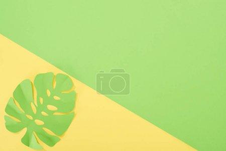Photo pour Vue du dessus du papier coupé feuille tropicale verte sur fond lumineux jaune et vert avec espace de copie - image libre de droit