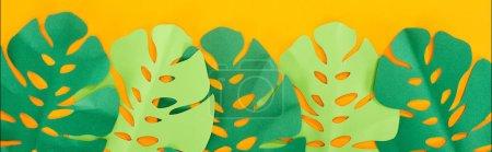Foto de Vista superior de hojas tropicales verdes cortadas en papel brillante fondo brillante, tiro panorámico - Imagen libre de derechos
