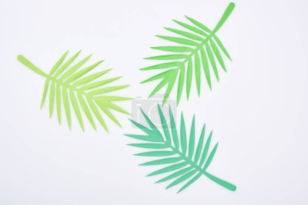 Photo for Top view of green paper cut tropical leaves isolated on white - Royalty Free Image
