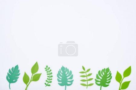 Photo pour Vue du haut du papier vert coupé feuilles tropicales en rangée isolées sur blanc avec espace de copie - image libre de droit
