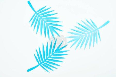 Photo pour Vue supérieure du papier bleu coupé les feuilles tropicales d'isolement sur le blanc - image libre de droit