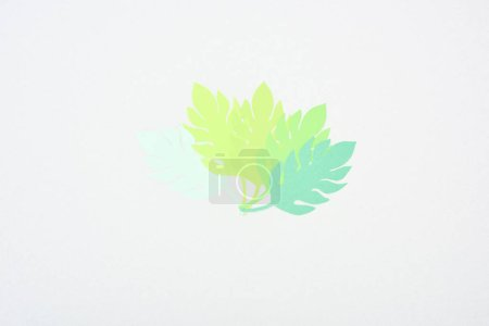 Photo for Top view of green paper cut tropical leaves isolated on white with copy space - Royalty Free Image