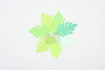 Photo pour Vue du dessus des feuilles tropicales coupées en papier vert isolées sur blanc avec espace de copie - image libre de droit
