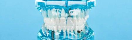 Photo pour Tir panoramique du modèle de dents avec les dents blanches d'isolement sur le bleu - image libre de droit