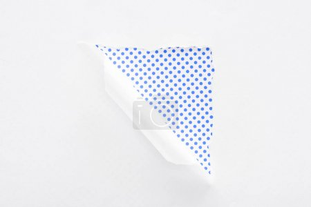Photo for White torn and rolled paper on polka dot blue and white background - Royalty Free Image