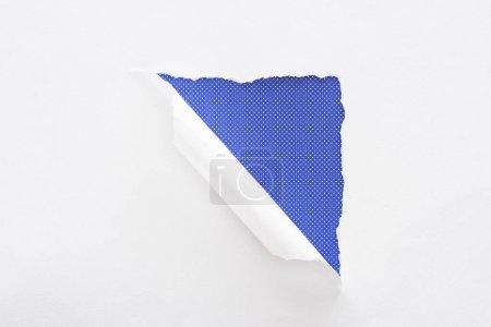 Foto de Papel blanco desgarrado y enrollado sobre fondo de puntos púrpura - Imagen libre de derechos