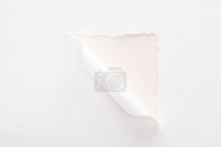 white torn and rolled paper on pastel light pink background