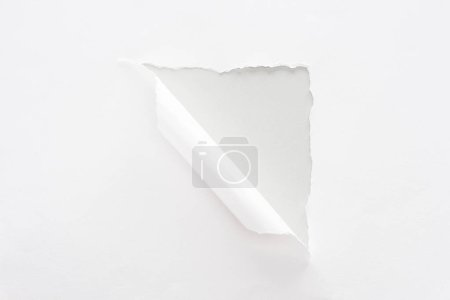 Photo for White torn and rolled paper on grey background - Royalty Free Image