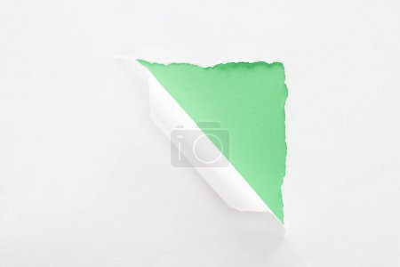 Photo for White torn and rolled paper on bright green background - Royalty Free Image