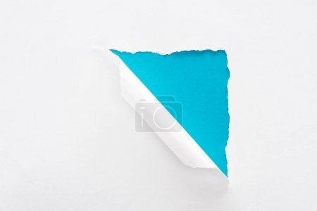 Photo pour Papier déchiré blanc et roulé sur le fond bleu coloré - image libre de droit