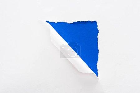 Foto de Papel blanco desgarrado y enrollado sobre el fondo colorido azul eléctrico - Imagen libre de derechos