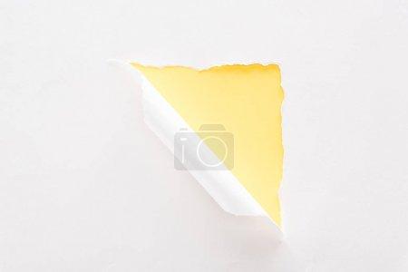 Photo pour Papier déchiré blanc et roulé sur le fond jaune coloré - image libre de droit
