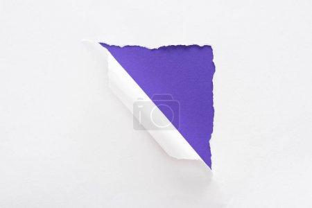 Foto de Papel blanco desgarrado y laminado sobre fondo colorido violeta - Imagen libre de derechos