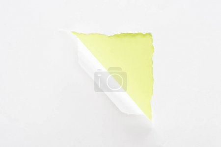 Photo for White torn and rolled paper on lime green colorful background - Royalty Free Image