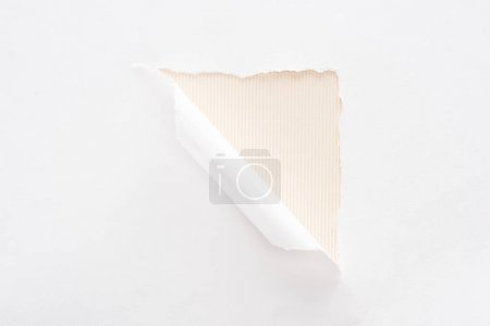 Photo pour Papier déchiré blanc et roulé sur le fond beige - image libre de droit