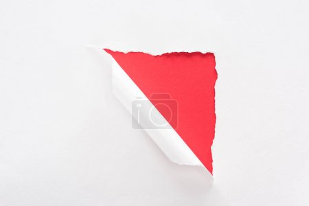 Photo for White torn and rolled paper on red colorful background - Royalty Free Image