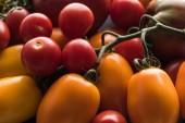"Постер, картина, фотообои ""close up view of yellow, red and cherry tomatoes """