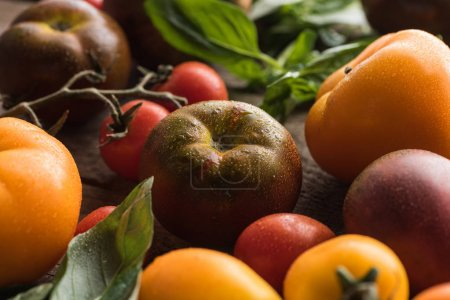 close up view of tomatoes with spinach on wooden surface