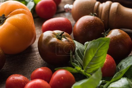 close up view of tomatoes with spinach near salt mill on wooden surface