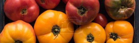 Photo pour Plan panoramique de tomates jaunes et rouges dans une boîte noire en bois - image libre de droit